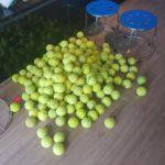 Combo 4 quả bóng cho Thú Cưng chơi (Bóng Tennis Cũ)